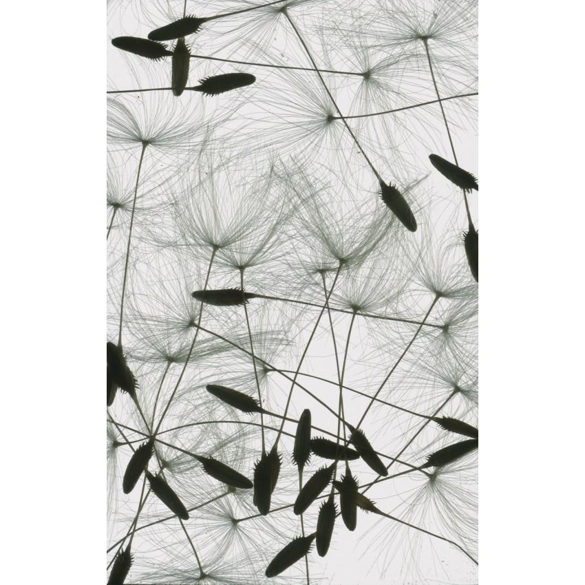 Diapographie de Tio en exposition à la galerie DODA à Bordeaux - Matière/Lumière